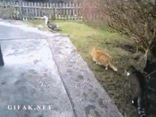 Enlace a El cazador cazado