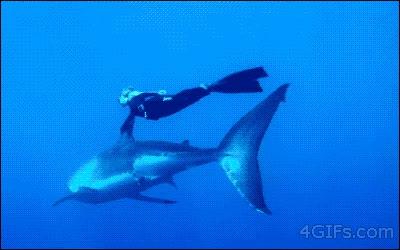 Enlace a Un tiburón es el mejor colega que te puedes echar en alta mar