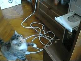 Enlace a Los gatos y la tecnología nunca se llevarán bien