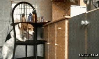 Enlace a El perro más listo del mundo