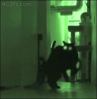 Enlace a Actividad paranormal gatuna