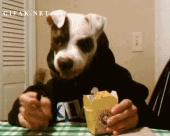 Enlace a ¿Quién dijo que a los perros no les gustaba la comida china?