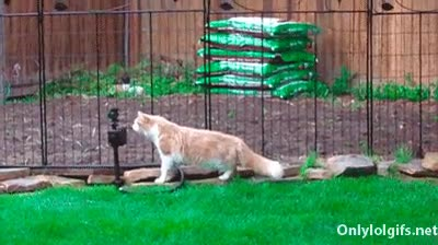 Enlace a La curiosidad mojó al gato