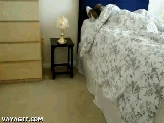 Enlace a ¿Un despertador para qué? Tengo un perro...