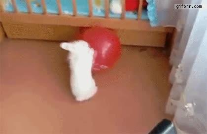 Enlace a Acabar rozando el infarto, nivel: conejo