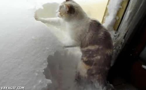 Enlace a No os preocupéis que yo despejo de nieve la entrada