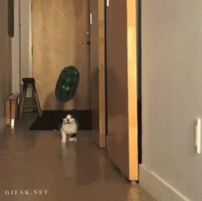Enlace a Pocas cosas pueden hacer más feliz a un gato