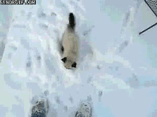 Enlace a Mierda, mierda, mis patas están frías... ¡Ven aquí, humano!