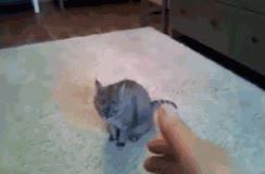 Enlace a Los gatos también se hacen el muerto