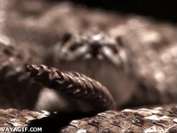 Enlace a Serpiente de cascabel a cámara lenta