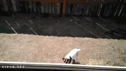 Enlace a Perros biónicos que saltan 3 metros