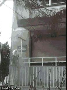 Enlace a El salto de gato más alto del mundo