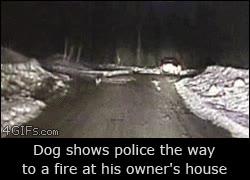 Enlace a Un perro enseña a la policía el camino a casa de su dueño, que está en llamas