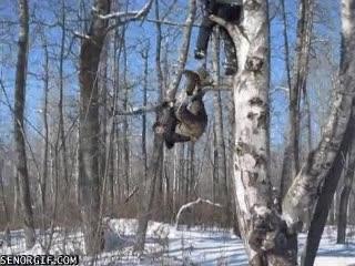Enlace a Hasta los árboles tienen sus límites
