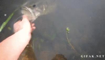 Enlace a ¿Caña de pescar? ¿Qué es eso?
