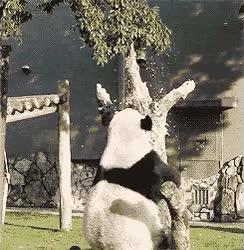 Enlace a Este panda va de culo