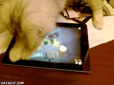 Enlace a Maldita la hora que enseñé a mi gato a jugar