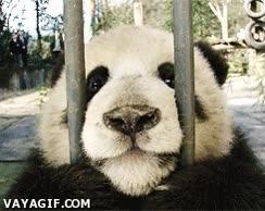 Enlace a ¡Libertad para los pandas, sacadme de aquí, cabrones!