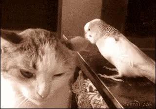 Enlace a Los gatos no se caracterizan especialmente por su paciencia