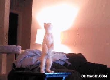 Enlace a ¿Qué es eso de ahí arriba? ¡Mierda, que me caigo!