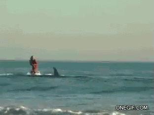Enlace a ¿Quieres surfear pero no hay olas? ¡Cógete un tiburón!