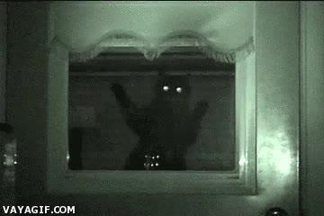 Enlace a Gatos que en medio de la noche te pegan el susto de tu vida