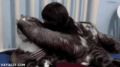Enlace a Un abrazo de perezoso y no estar seguro de salir vivo de él