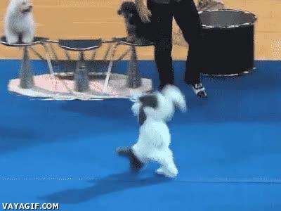 Enlace a Increíble perro haciendo backflips seguidos como si nada