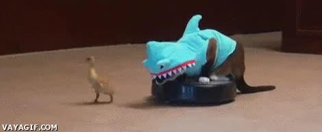 Enlace a Sólo falta la banda sonora de la película Tiburón sonando de fondo...