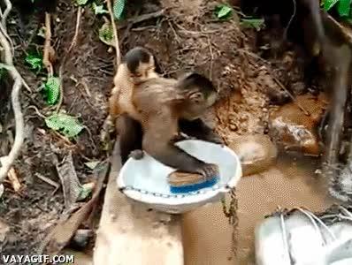 Enlace a Mamá, te quería comprar un lavavajillas, pero como no me llegaba el presupuesto...