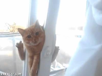 Enlace a ¿Te importaría dejar la ventana un poco más abierta la próxima vez?