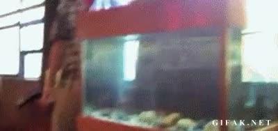 Enlace a ¡Estoy harto del puto pez todo el día haciéndome burlas, YO TE MATOOO!