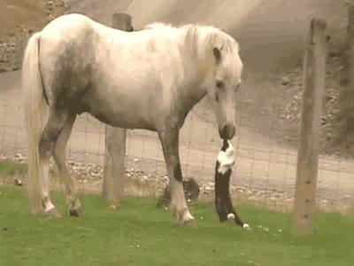 Enlace a ¡Suéltame estúpido caballo, que tú eres vegetariano!