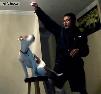 Enlace a Amos troll, la peor pesadilla de un perro