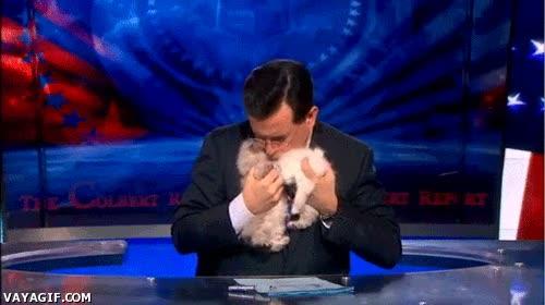 Enlace a Nadie se puede resistir al poder enternecedor de los gatitos