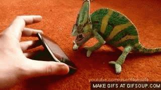 Enlace a Un iPhone, lo peor que le puedes enseñar a un camaleón