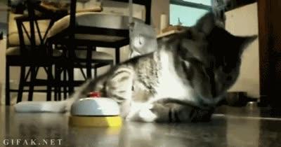 Enlace a Los gatos suelen ser los amos de la casa, pero este es el emperador del barrio como mínimo