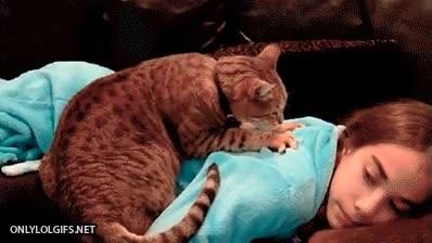 Enlace a Nota mental: necesito un gato en mi vida, ¡pero ya!