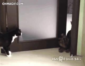 Enlace a ¡Atrás gato, este territorio es canino!