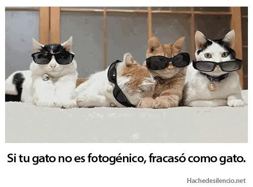Enlace a Ese incómodo momento en que tu gato sale mejor en las fotos que tú