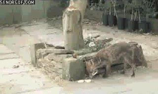 Enlace a ¡Estúpido zorro! ¿Qué haces en mi jardín?