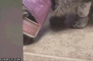 Enlace a Por si llevar el cono no fuese bastante suplicio, desde luego, no es el día de este gato