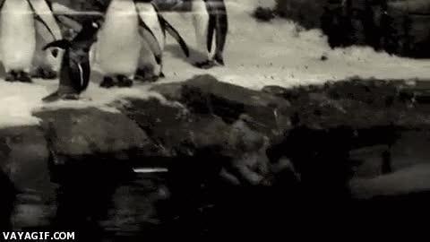 Enlace a No sé si el pingüino es increíblemente rápido o hay un portal dimensional en el agua
