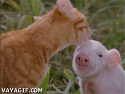 Enlace a Pues no lo entiendo, dicen que el bacon sale de ti, pero tú no sabes a bacon