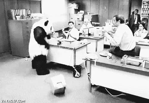 Enlace a El oso panda al que no se le puede decir que no