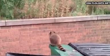 Enlace a Llegaré al otro lado del muro o dejaré de llamarme mapache