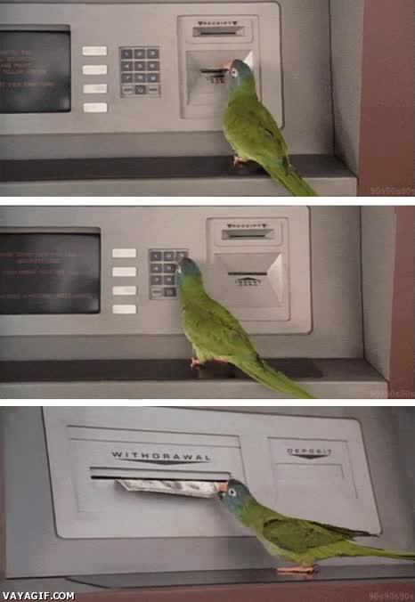 Enlace a Un ladrón acaba de enseñar a un loro a robar dinero del cajero