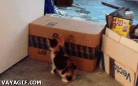Enlace a Los gatitos ya nacen con una inteligencia muy desarrollada