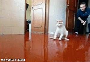 Enlace a Gatos y suelo deslizante, la combinación perfecta