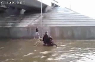 Enlace a Héroe del día: perro empujando una silla de ruedas durante una inudación
